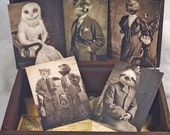 Set of 5 original Postcards - Mini Print Set N3 - owl fox turttle sloth bear leopard animal portrait old anthropomorphic