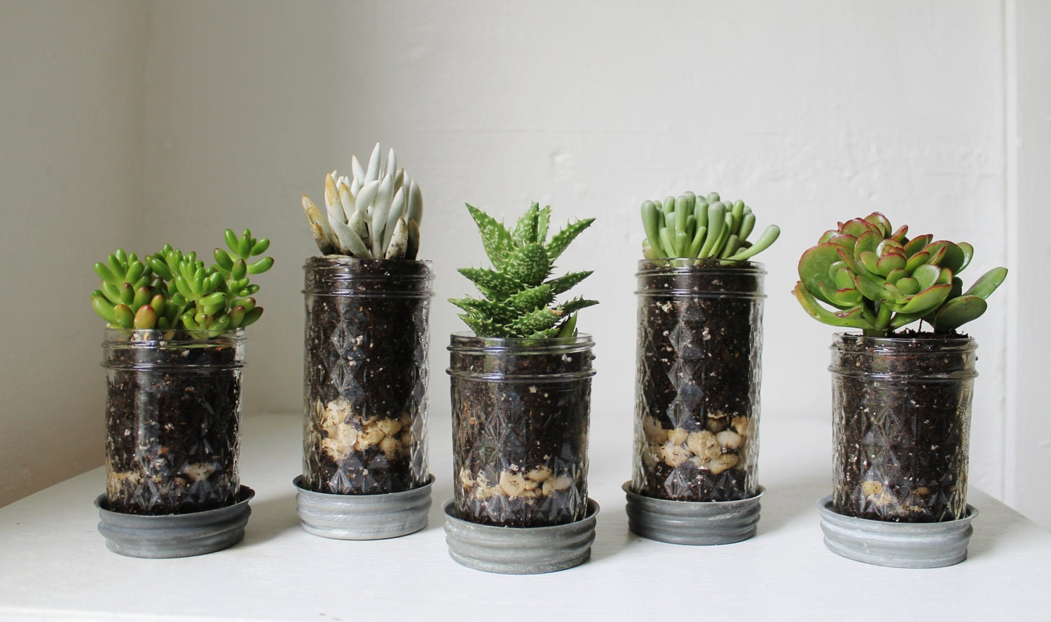 Mason jar planters with drainage set of 5 upcycled jelly for Decoration jardin cactus