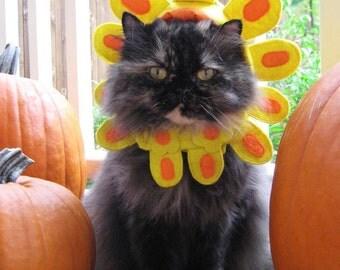 That Cat Originals cat hat note cards