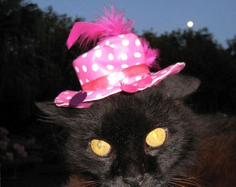 In the Pink cat hat