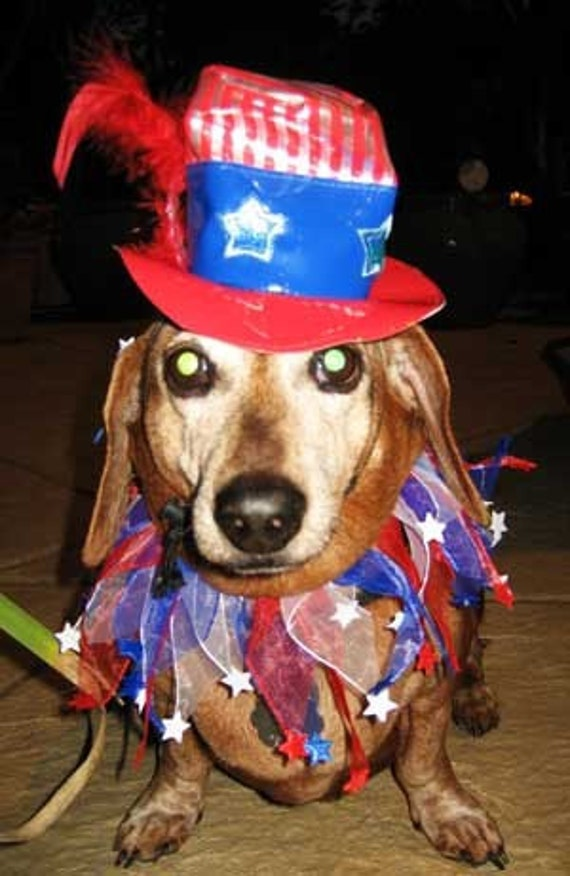 Uncle Sam dog or cat hat and collar