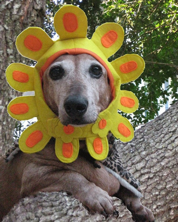 Late Bloomer costume flower hat for dogs and cats