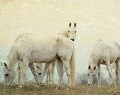 Horse Photography, Dreamy Animal Photography, White Horses, Nature Photo, White, Cream, Golden