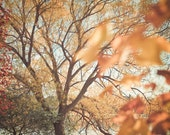 Autumn Nature Photography - Copper and Gold Fall Leaves and Trees, Green Lake, Seattle, Washington, Large Wall Art, Home Decor