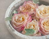 Paris Photography - Les Belles Roses, Bowl of Pink and Yellow Roses in Paris Flower Market, French Fine Art Travel Photograph, Wall Decor