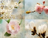 Spring Blossom Photo Collection -  Romantic Pink and Blue Floral Photographs, Wall Art, Home Decor