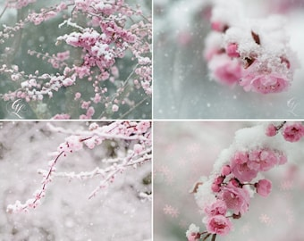 Winter Nature Photography - Snow Blossoms, Fine Art Print Set, Pink Plum Blossoms in Snow, Dreamy, Magical Home Decor