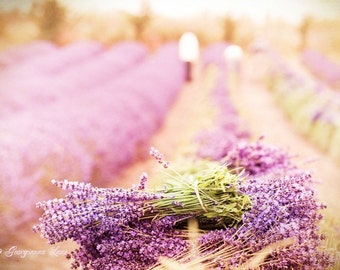 French Country Photography - Lavender Harvest, Fine Art Photograph, Home Decor, Large Wall Art