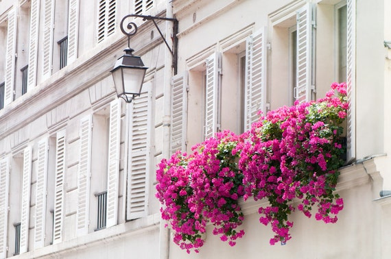 Paris Photograph - Pink Flowers in Window Basket and Shutters, Travel Home Decor, Wall Art