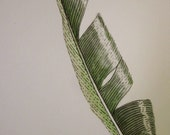 Sleek green feather -- original ink and watercolour drawing