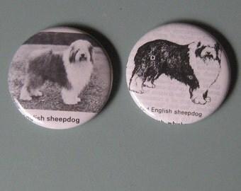English Sheepdog Vintage Dictionary Illustration Magnet Set of 2