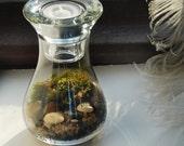 Original tea light terrarium kit with live moss