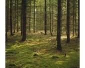 Thetford Forest 4 - 8x10 Polaroid Print