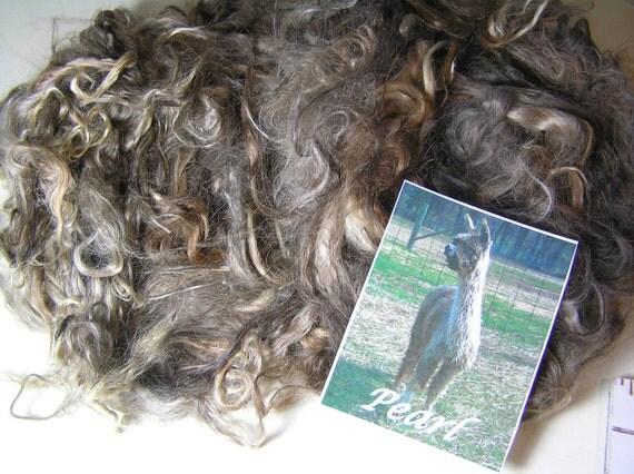 """Suri Alpaca Washed, Natural Colors, 6"""" Average Locks, Handspinning or Doll Hair, Pearl"""