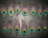 50 Pieces beautiful Peacock eye feather of natural color