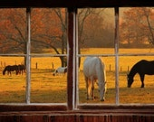 Wall mural window, self adhesive -Cades Cove window view-3 sizes available - free US shipping