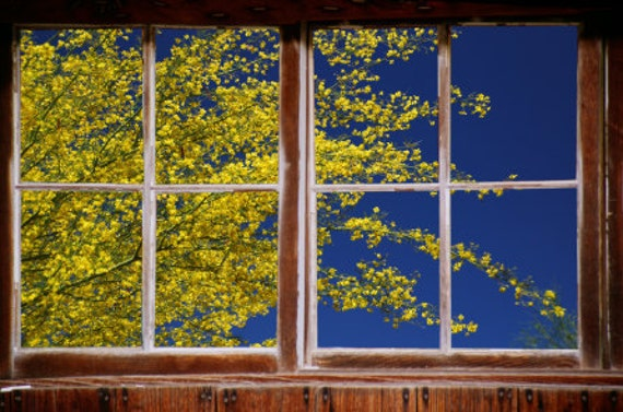Wall mural window, self adhesive, southwestern blooming tree- window view- 3 sizes available - free US shipping