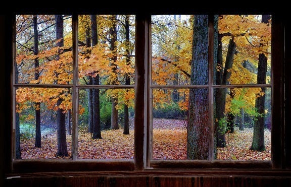 Wall Decal Autumn Window View Large 24x36