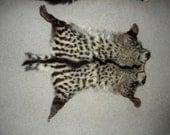 RARE Tanned Civet Cat Back Fur