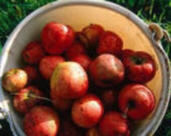 1 oz Apple Jack and Peel  Fragrance Oil