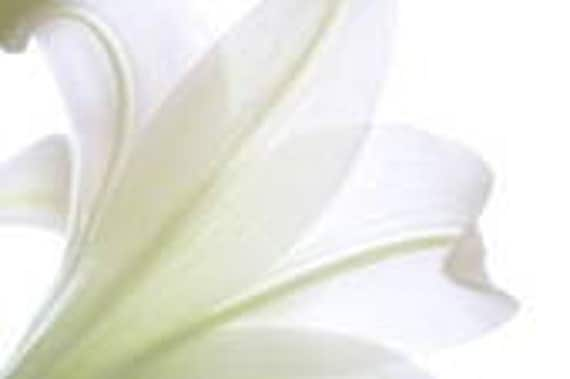 1 oz China Lily Fragrance Oil