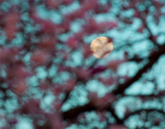 Full Moon Photograph titled Full Moon Through the Peach Trees-- 11x14 on Fine Art Paper