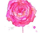 Watercolor Peony Painting, Jessica Durrant - In Full Bloom print