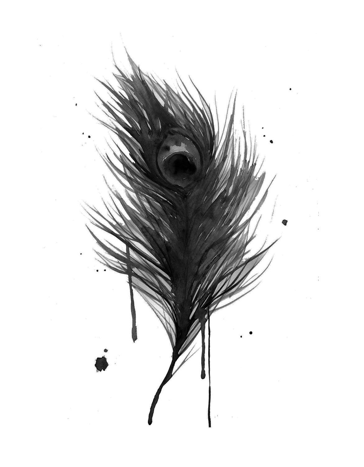 Peacock Feather Black And White