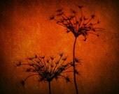 Fine Art Photography Print - Burn The Queen 8x10