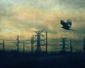 Landscape Photography - Nature Photography - Green Blue Sky - Crow Power 5x7