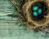 Nature Photography - natural history brown bird's nest on a sea of teal blue - Little Gems