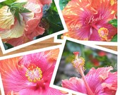 HIBISCUS  Set of 4 Hawaiian Flowers Note Cards