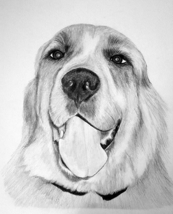 Custom pet portrait in pencil 8x10 original