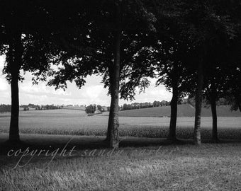Fine Art Photograph - French Trees