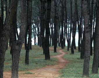 A Path Through the Trees Fine Art Photograph