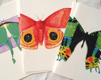 Moth notecards - set of 6 blank cards