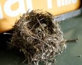Natural Woodland Birds nest made by a little birdie in Door County Wisconsin