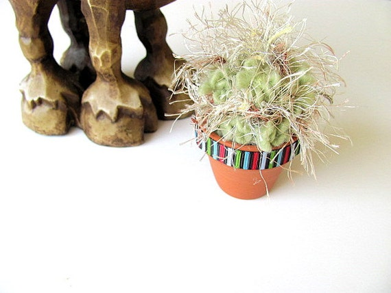 Mini Fiber Old Man Cactus Plant FREE US Shipping
