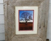 Halfway Tree - Framed Photography 5x7