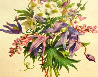 Vintage Botanical Print - Flower Portrait - Carlos Von Riefel - Aconitum, Willow Herb, Anemone, Clematis