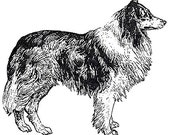 Unmounted Rubber Stamp - Dog 1  - Standing Collie