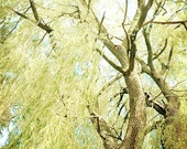 Willow tree photography 5x7 forest photograph tree photograph weeping willow fine art nature wall art olive green light blue