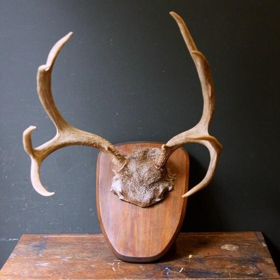 Antler Trophy / Large Ten Point Deer Antlers