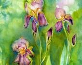 Iris Flower Art Watercolor Painting  - Blank Card
