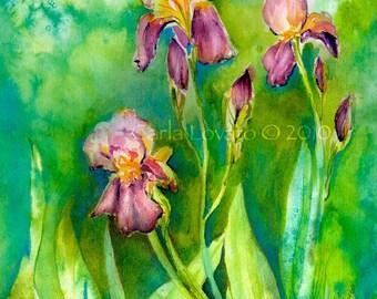 Iris painting, watercolor original, Floral wall art, home decor, flower illustration, garden art, garden landscape