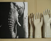 An Elephant Never Forgets on 16x20 canvas black and white