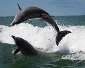 Dolphin Photo, Dolphin Photograph, Dolphin Photography, Sanibel Island, Ocean Photography, Dolphin Theme, Dolphin Decor, Dolphins