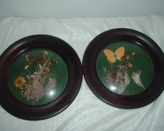 Antique Framed Butterfly and Dried Flowers