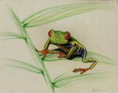 WAITNG FOR A KISS - Original Framed prisma pencil drawing of a Red-Eyed Tree Frog