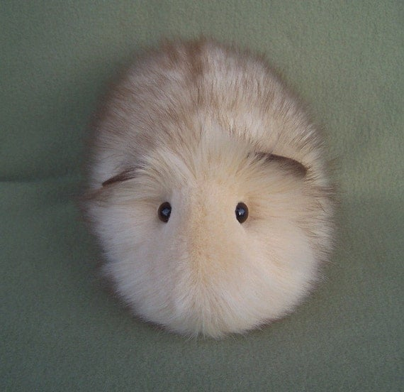 Honey Blonde Guinea Pig
